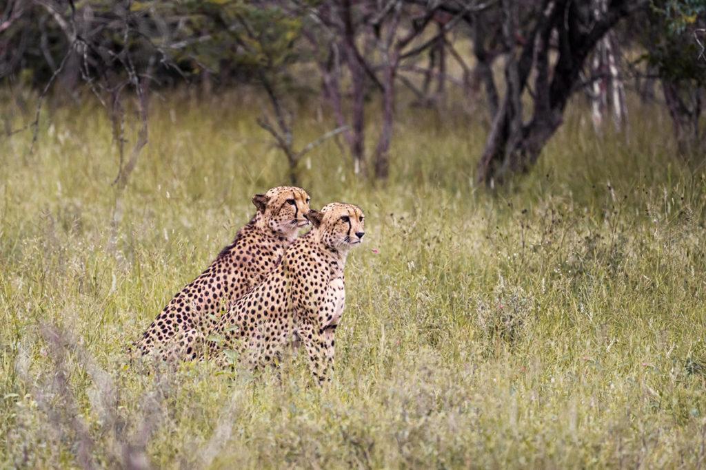 Karongwe Game Reserve Südafrika