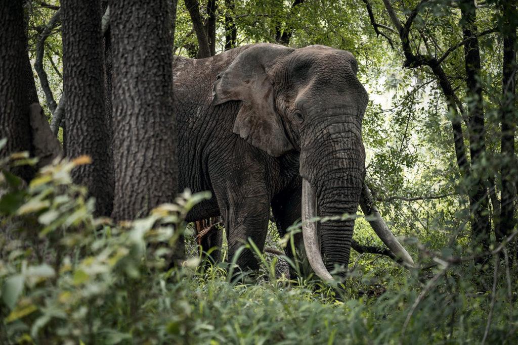 Ranger-Ausbildung in Südafrika mit EcoTraining 10