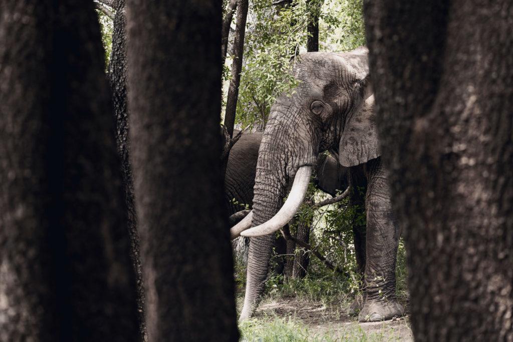 Elefanten Besuch im Camp