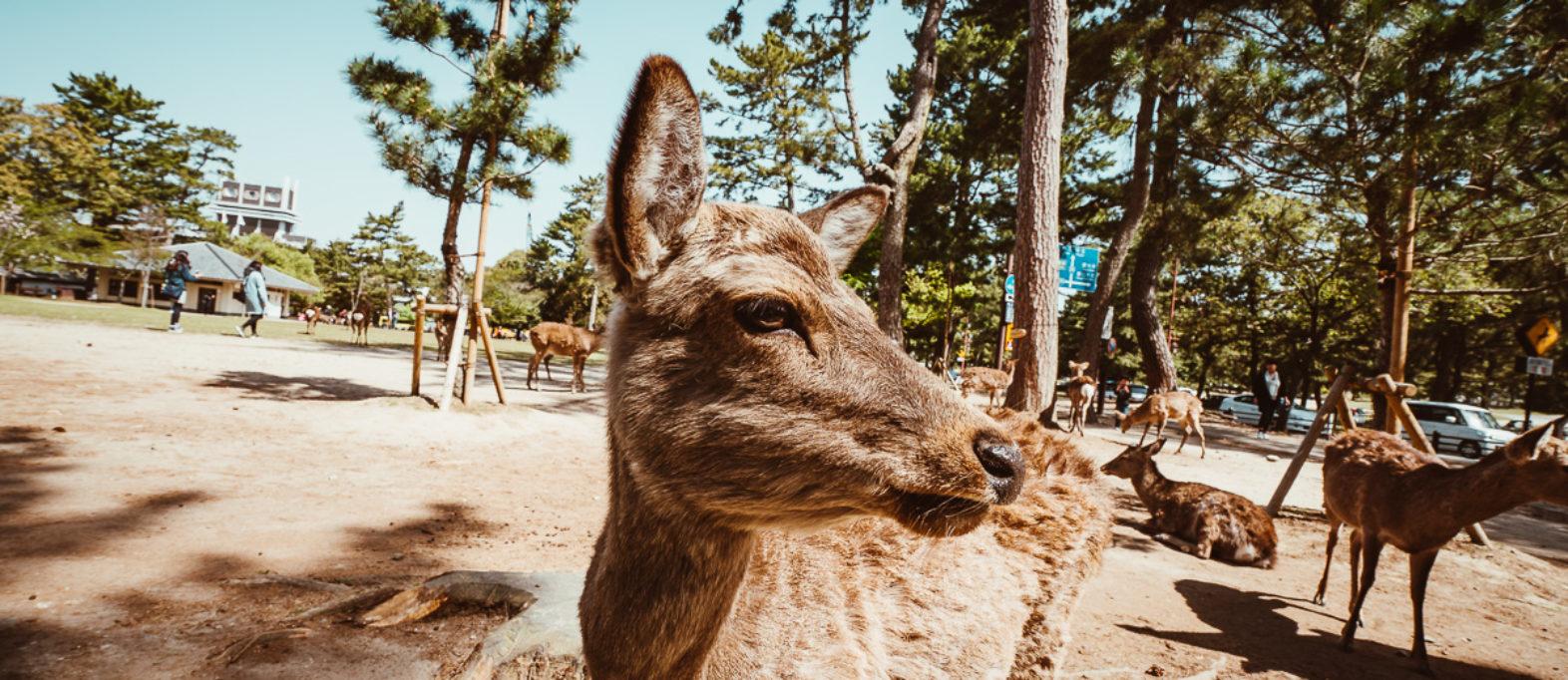 Entdecke Nara in 24 Stunden auf eigene Faust