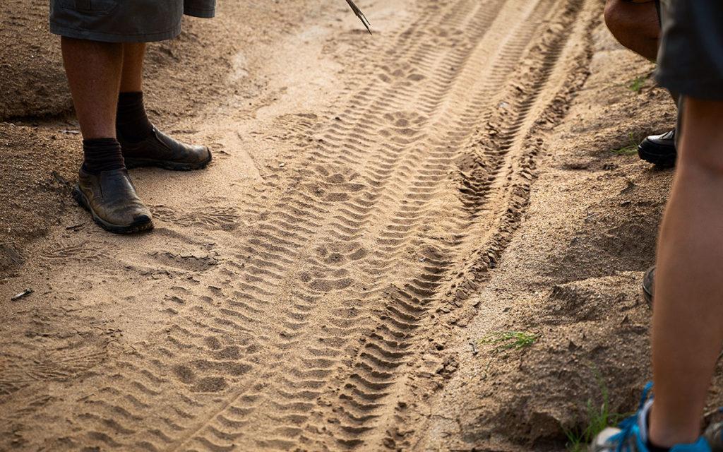Ranger-Ausbildung Leoparden Spuren
