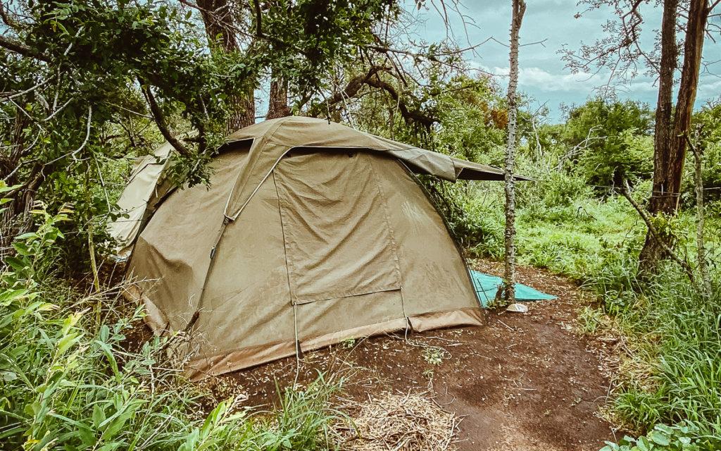 Pridelands Camp Ranger Ausbildung