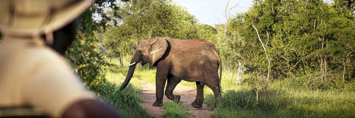 Ranger-Ausbildung in Südafrika mit EcoTraining