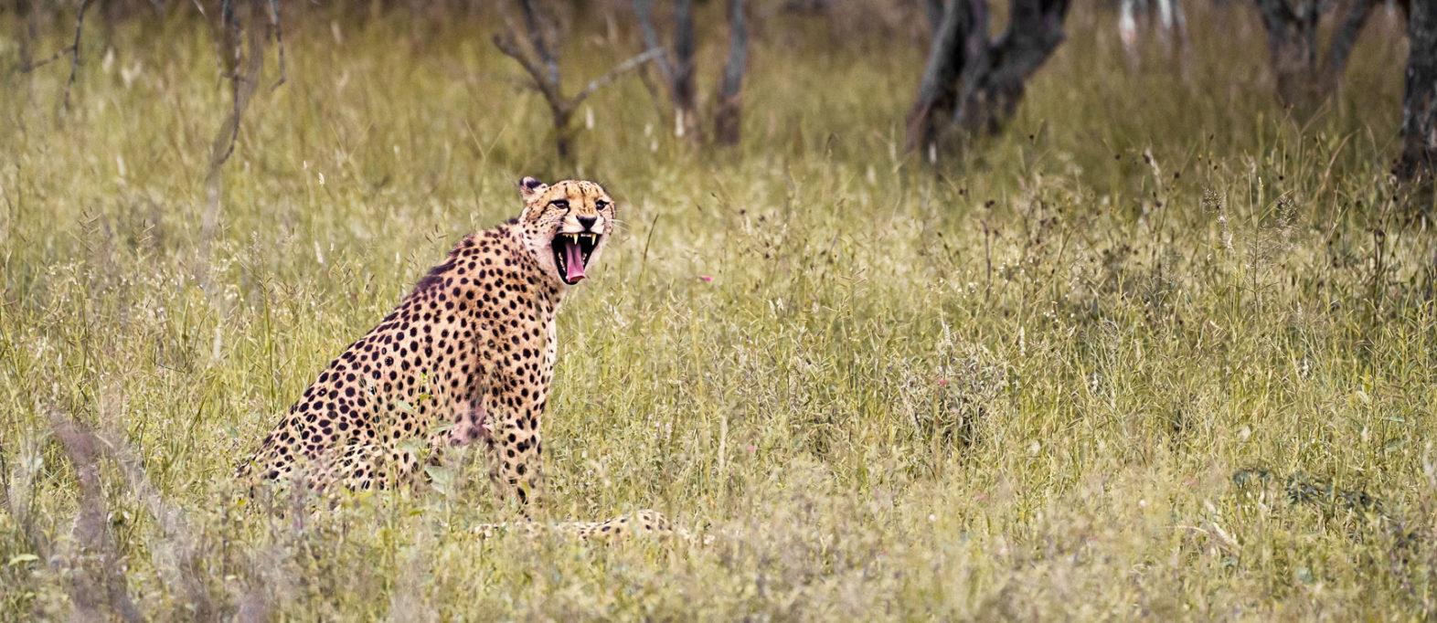 Ranger Ausbildung bei EcoTraining: Gepard