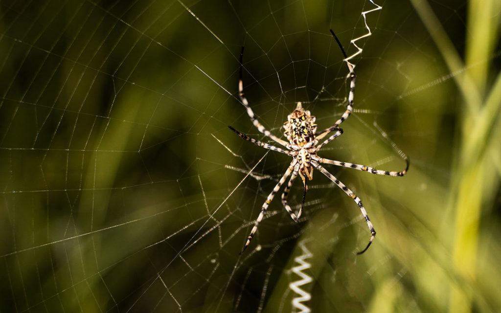 Busch Südafrika Spinnen