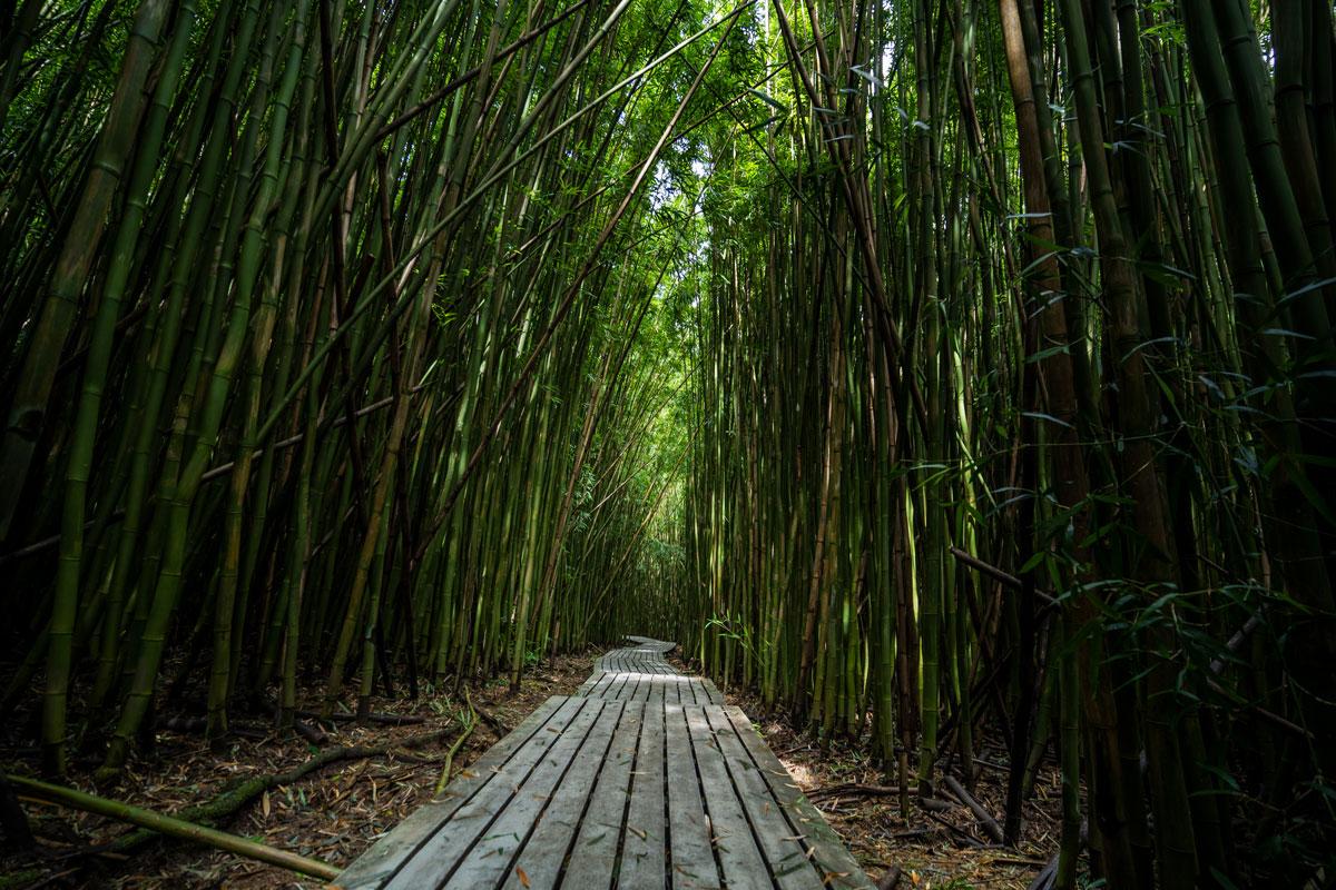 Bamboo Forest, Pipiwai Trail, Maui