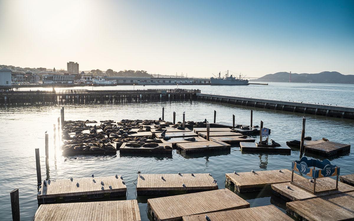 Seelöwen am Pier 39 (Fisherman's Wharf)