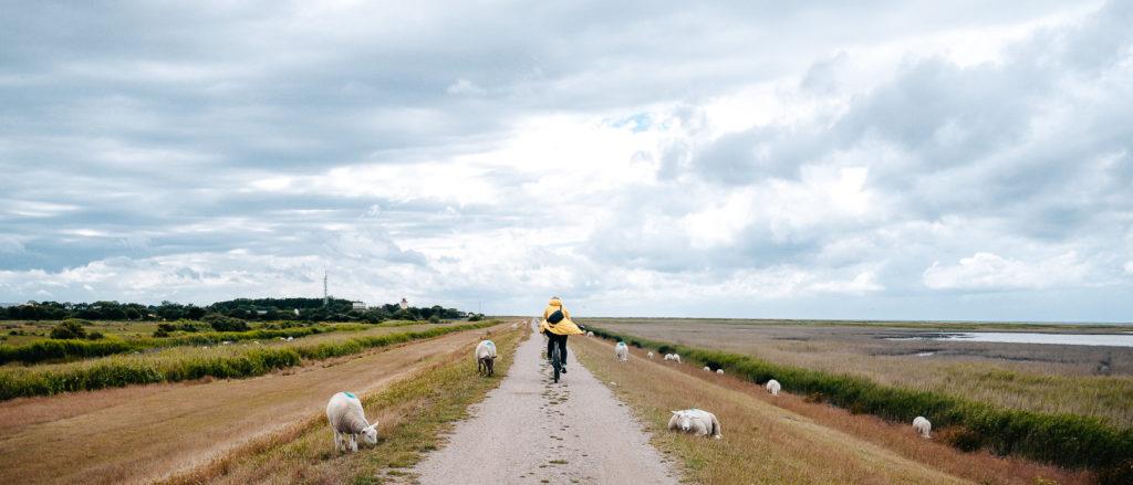 Insel Fehmarn Radwege