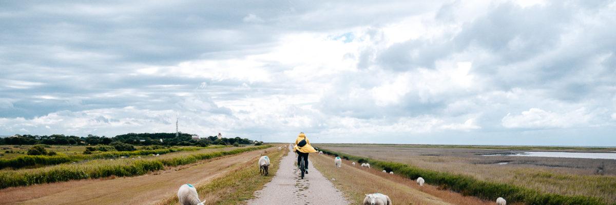 Tipps für die Insel Fehmarn: 11 Dinge die du unternehmen kannst