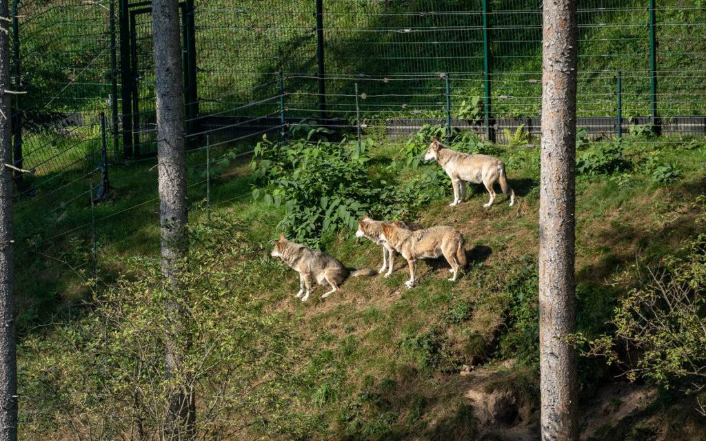 Ausflugsziele für den Schwarzwald (auch mit Kindern) 53