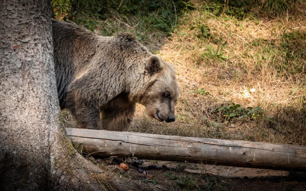 Ausflugsziele für den Schwarzwald (auch mit Kindern) 52