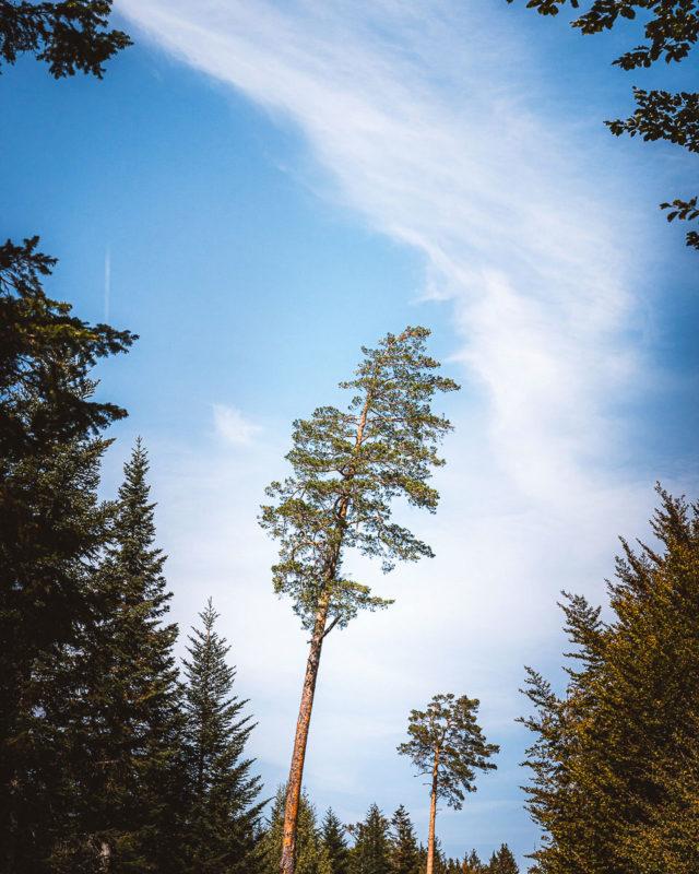 Bad Wildbad im Nordschwarzwald: Sehenswertes und Tipps für Ausflüge 12