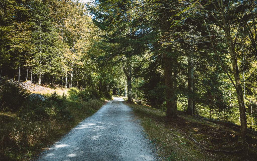Bad Wildbad im Nordschwarzwald: Sehenswertes und Tipps für Ausflüge 10