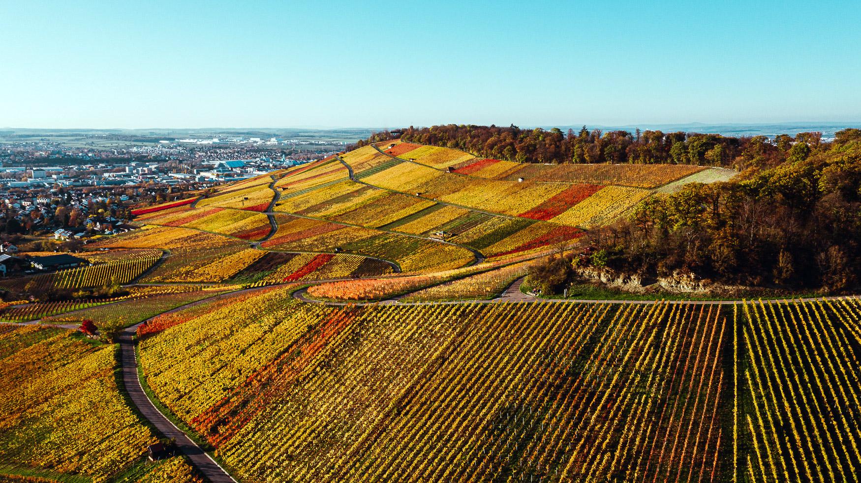 Weinberge Heilbronn Herbst