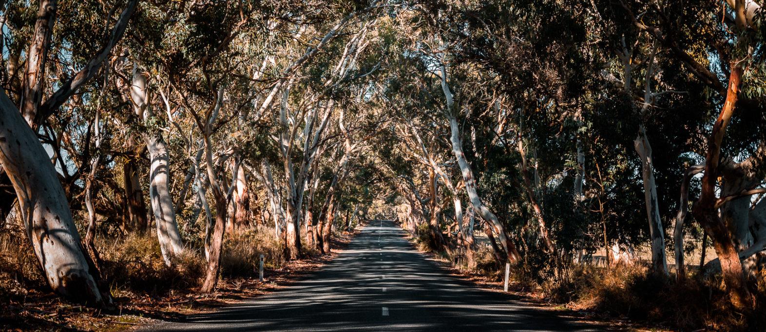 Roadtrip auf dem Explorer's Way mit Campervan (Darwin bis Adelaide)