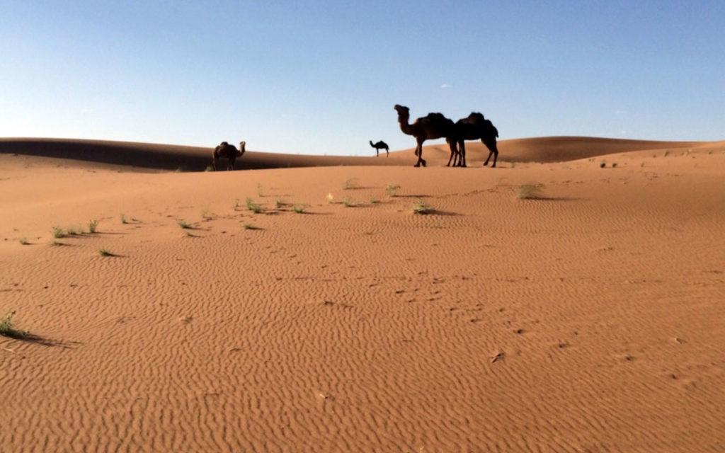 Backpacking Marokko: Rundreise durch Marokko & meine Highlights 10