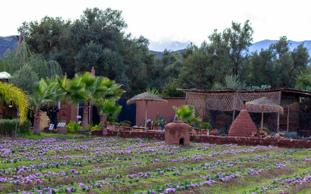 Paradis du Safran im Ourikatal außerhalb MaArrakesch