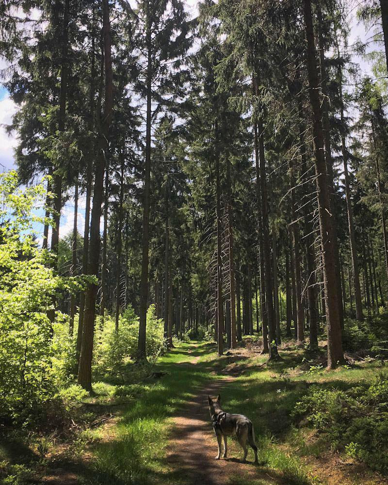 Wandern mit Hund im Elsandsteingebirge der Sächsischen Schweiz