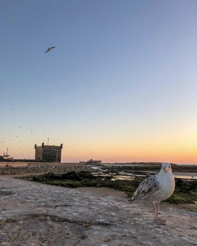 Essaouira in Marokko: Meine Highlights und Reisetipps 8