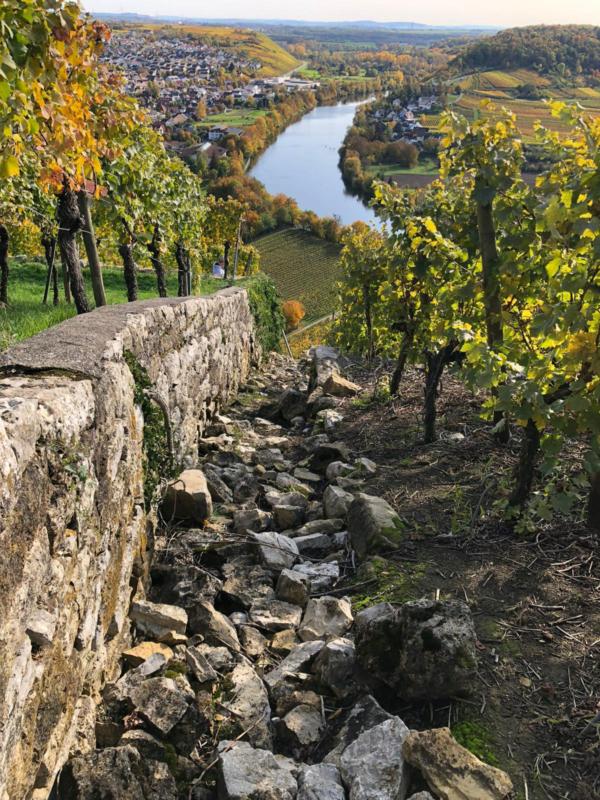 Felsengärten Hessigheim Wanderung