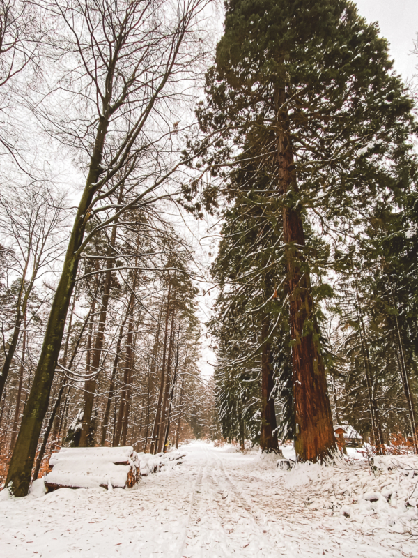 Ausflugsziele rund um Heilbronn: 33 Tipps für Wanderungen, Ausflüge und Aktivitäten in der Region 13