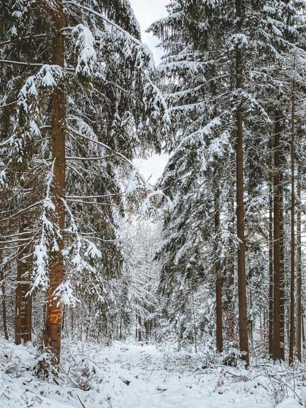 Ausflugsziele rund um Heilbronn: 33 Tipps für Wanderungen, Ausflüge und Aktivitäten in der Region 12