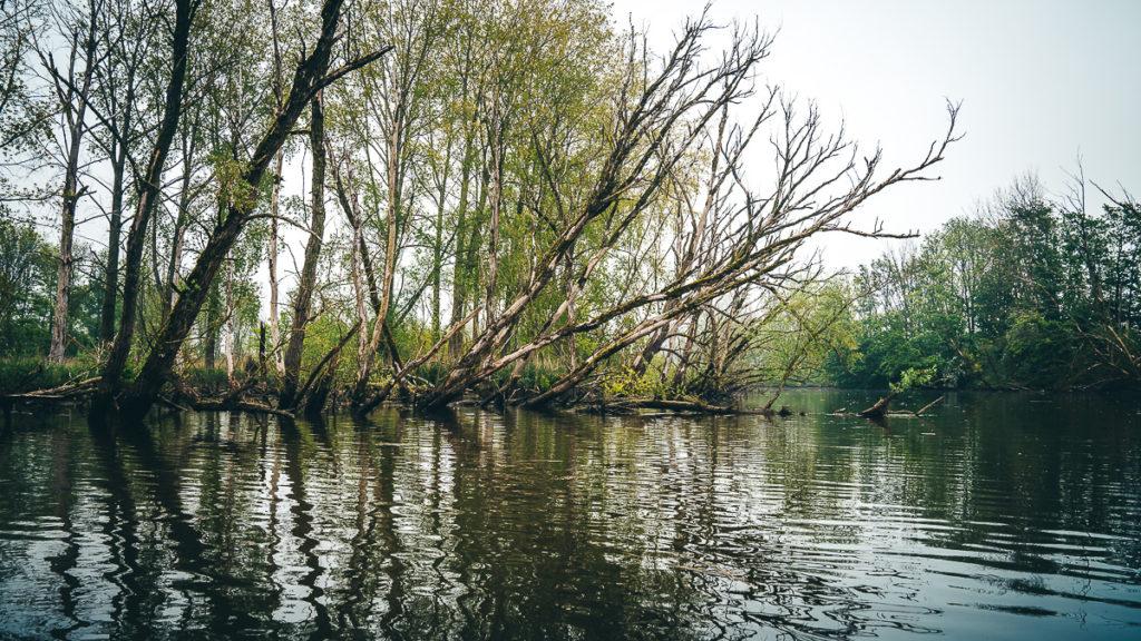 Roadtrip in Nordbrabant: Ein Mix aus Natur, Outdoor-Aktivitäten und idyllischen Städten 37