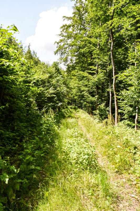 Thüringens schöner Südwesten: Die Region Schmalkalden-Meiningen 38