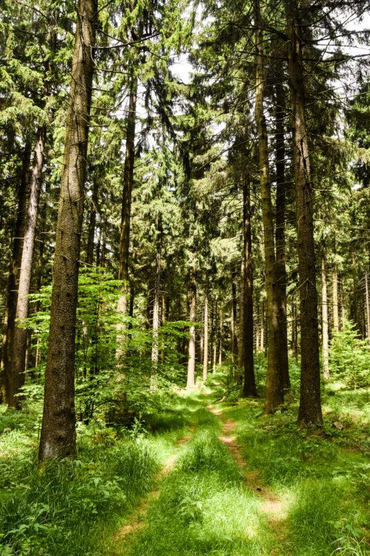 Thüringens schöner Südwesten: Die Region Schmalkalden-Meiningen 41