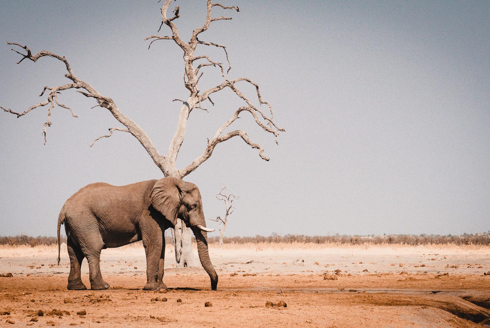 Reiseberichte & Tipps für Botswana