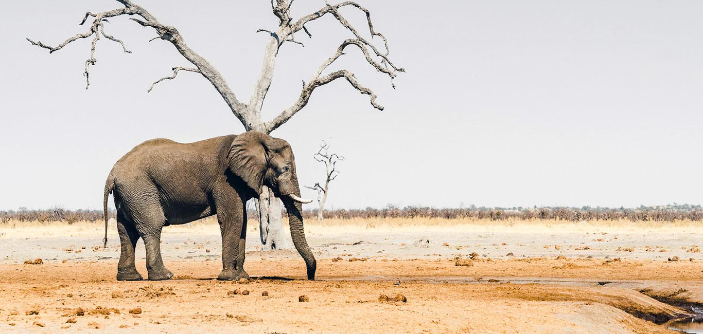 Botswana: Reiseberichte & Tipps für individuelle Rundreisen
