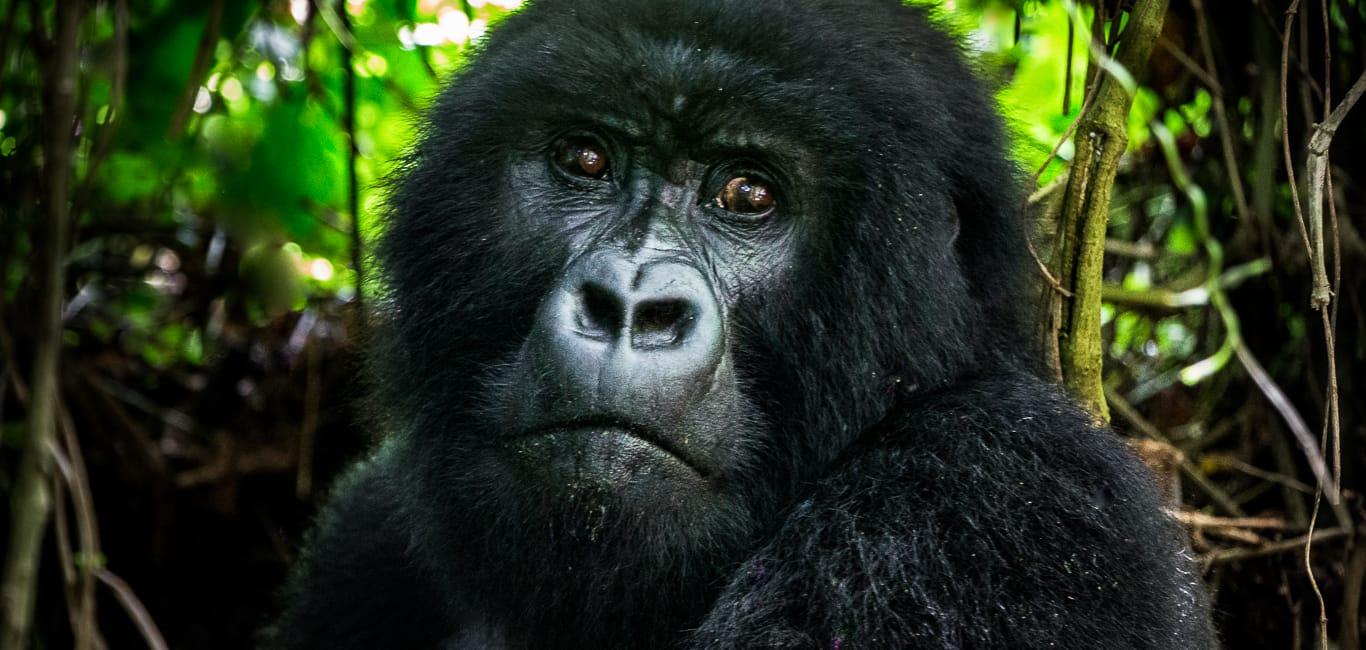 Ruanda Reiseberichte, Inspiration und Tipps
